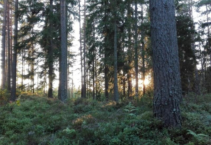 Eropuit en genieten van de stilte in Tivedens Nationaal Park