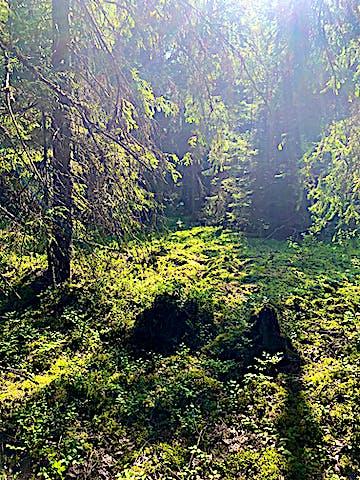 Landskapet i Stickelsbergs naturrereservat är varierat. Foto: Lena Malmström
