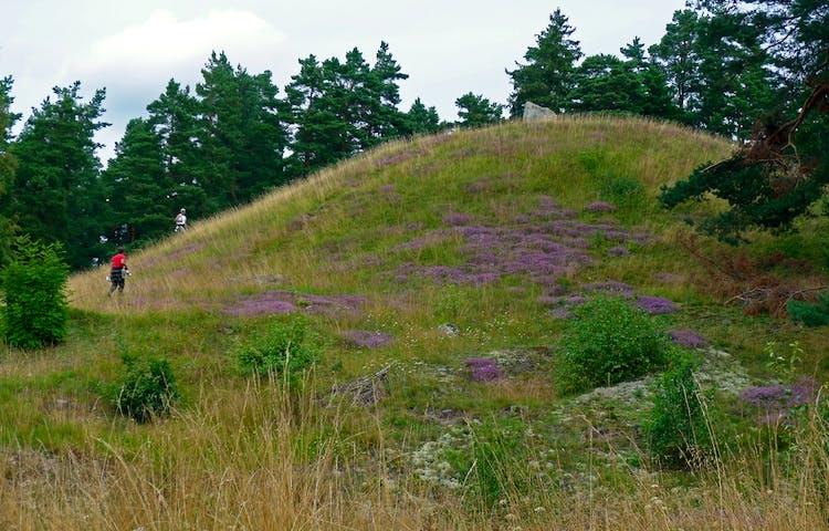 Nordians hög i Fysingens naturreservat. Foto: Länsstyrelsen Stockholm