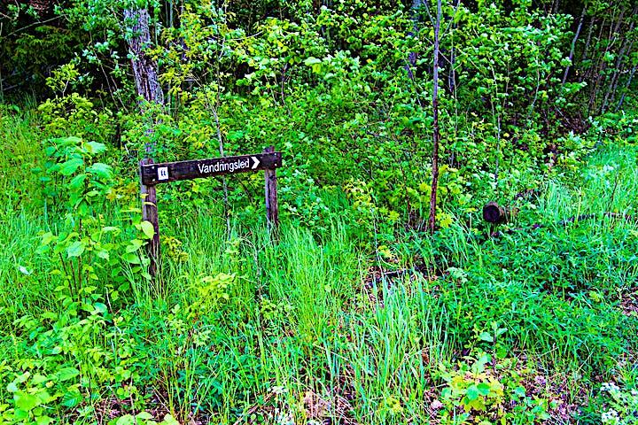 En träskylt med en pil och texten: Vandringsled.