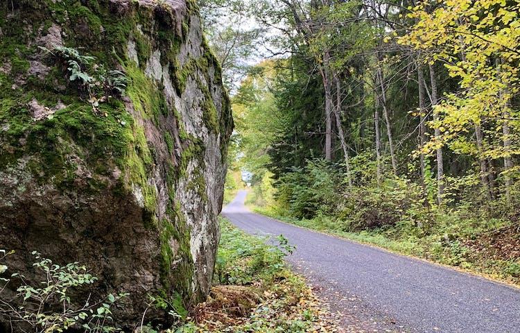 Erkenvägen går genom Hasselhorns naturreservat. Foto: Lena Malmström