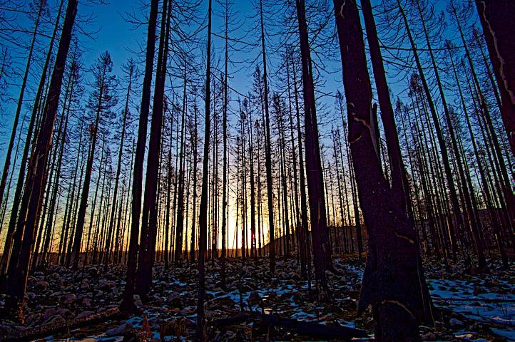 Solen går ner bakom de svartbrända träden.