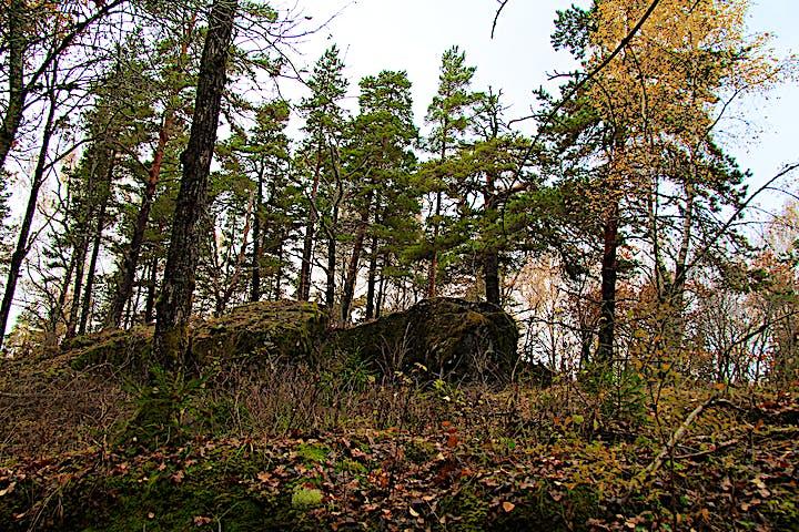 Träd och stenar.