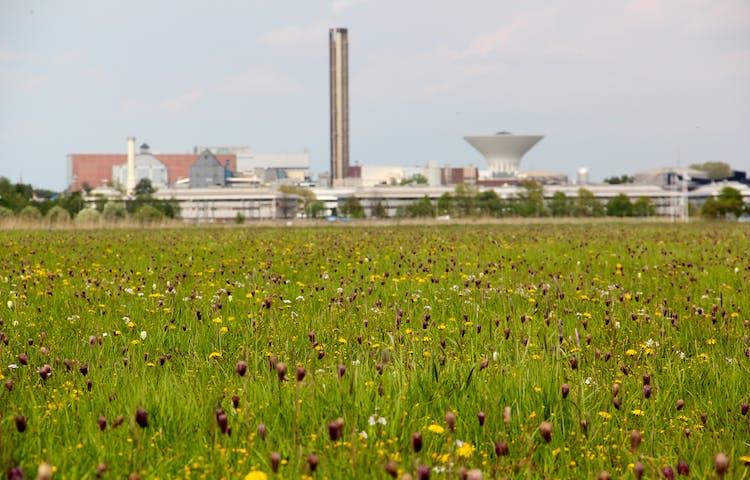 En blomsteräng med mängder av blommor i lila, gult och vitt. I bakgrunden syns ett industriområde.