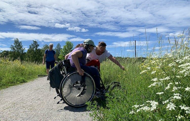 Tre kvinnor, varav två i rullstol, tittar på något (fjärilar) bland blommorna vid kanten av en bred stig.
