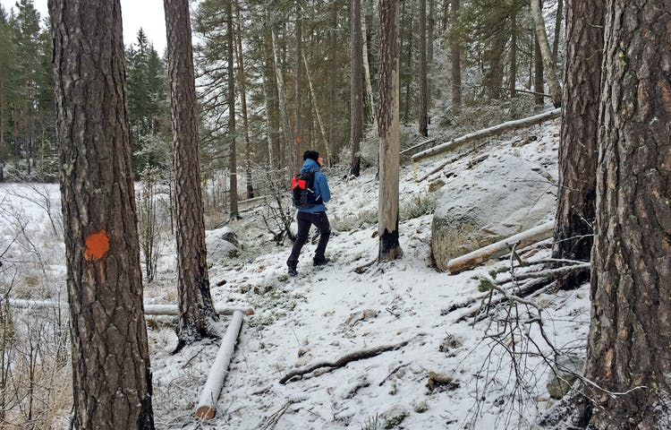 En person går på vandringsleden längs en mosses kant.