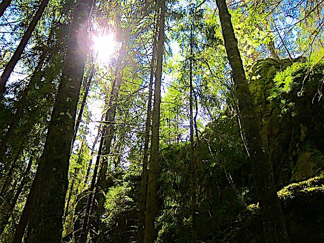 Solens strålar letar sig ner mellan träden.