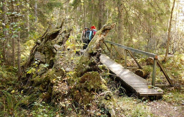 En grupp människor står på en smal träbro med handräcke på ena sidan. Runtomkring är det tät skog.