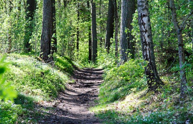 Stig med rötter i ett grönskande landskap.