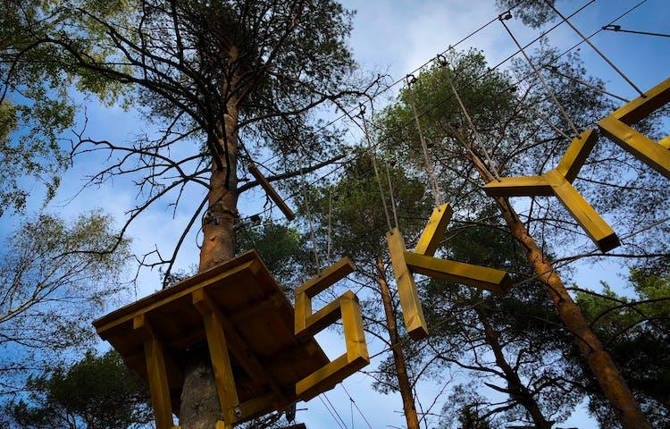 Bokstäver i trä uppe bland talltopparna.
