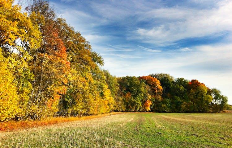 Höstfärgade träd bredvid en stubbåker.
