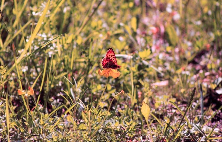 En fjäril sitter på en blomma