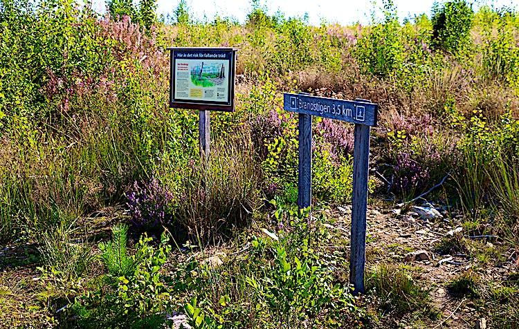 Informationsskylt och vägvisningsskylt bland blommande ljung och grön sly.