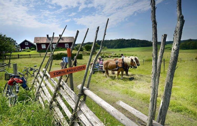 En gärdesgård, sörmlandsledsskylt och parhästar som brukar marken.
