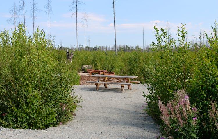 Picknickplats med bänkar på en grusad yta bland grön sly.