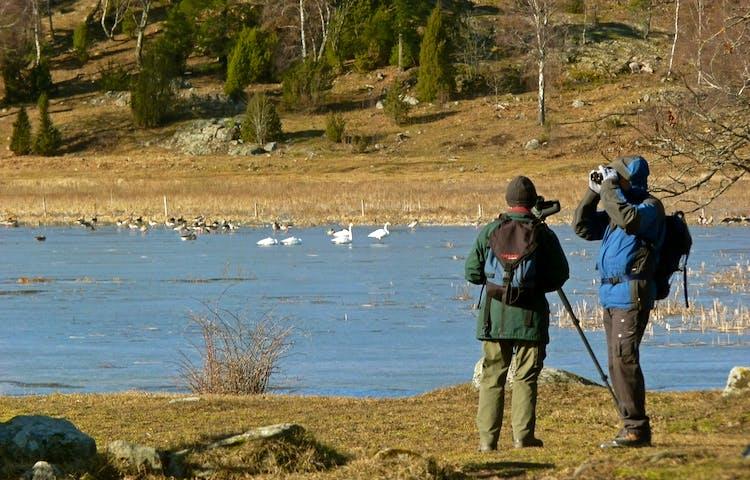 Fågelskådare vid Angarnssjöängen.