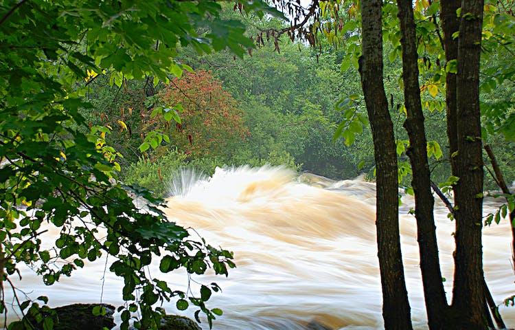 Vattnet forsar fram i hög hastighet. Fotot är taget mellan några träd. På andra sidan forsen syns ett träd fullt av rönnbär.