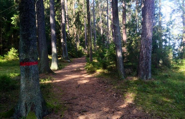 Stigen slingrar fram i olika skogstyper på Lovön.