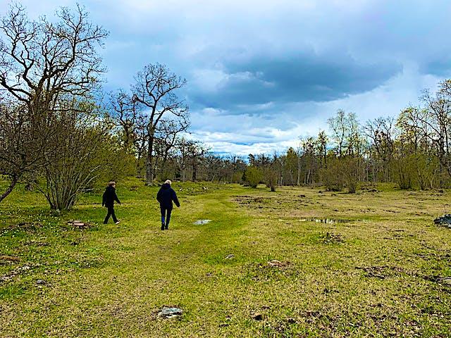 Ängarna som är Häverö prästängs kärna. Foto: Länsstyrelsen