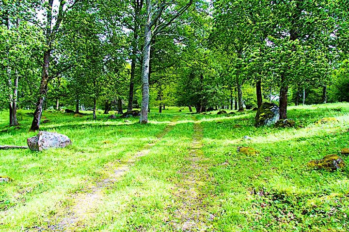Traktorväg mellan gräs, träd och stenar.