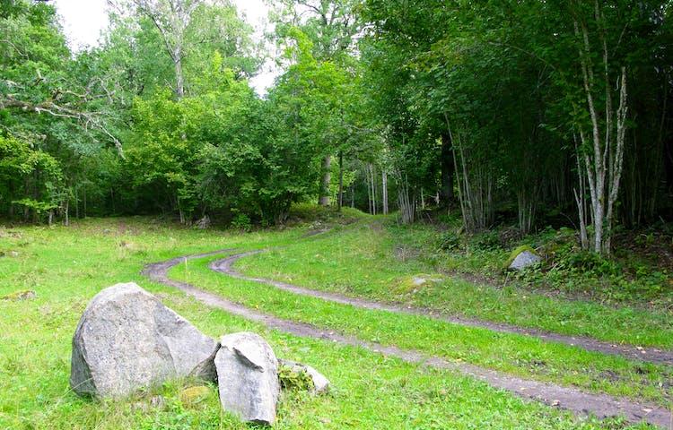 Två smala stigar löper parallelt över en gräsyta. I bakgrunden är det skog och i förgrunden finns några större stenar.
