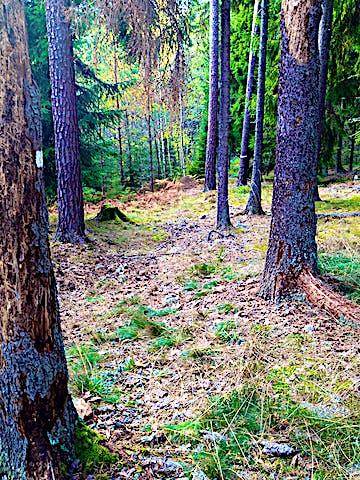 Gullunge naturreservat. Foto: Länsstyrelsen Stockholm