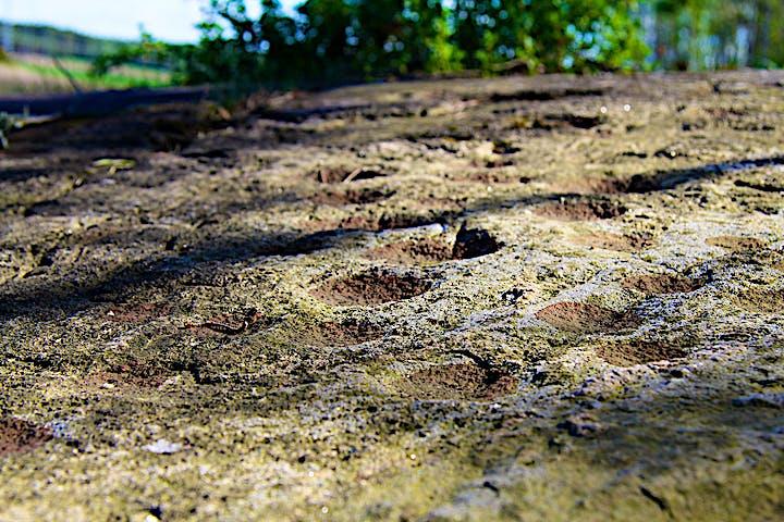 Skålgropar, en sorts hällristning, på klipphäll. Fotat i närbild.