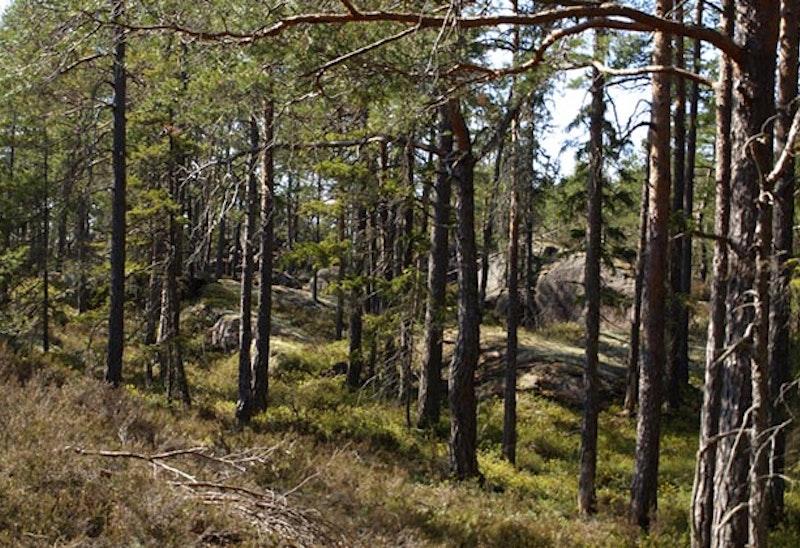Rankemossen, Naturreservat