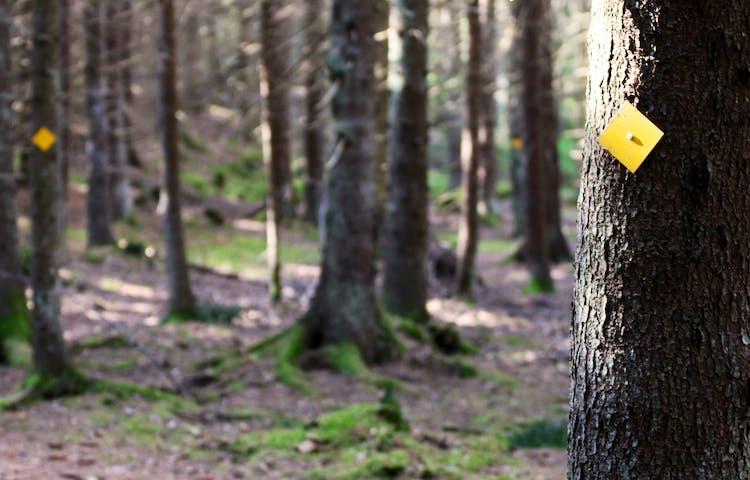Orangemarkering på träd visar vägen.