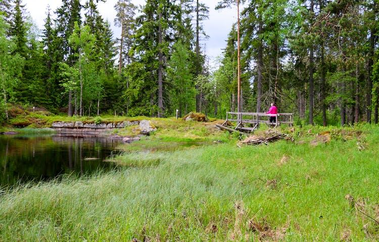 En spång med räcken leder över en sjö.
