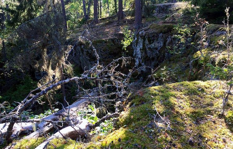 En grå gammal trädstam ligger över en klippskreva.