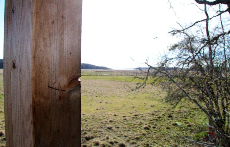 Trästomme i förgrunden. Vy ut över ängsmarker.