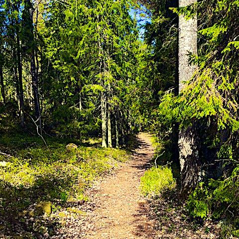 Fjädrande stig i Tullviksbäcken. Foto: Länsstyrelsen Stockholm