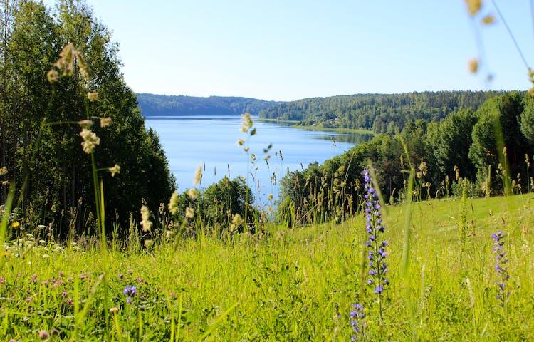 Utsikt över en gräsklädd sluttning. Sluttningen leder ned till en sjö.