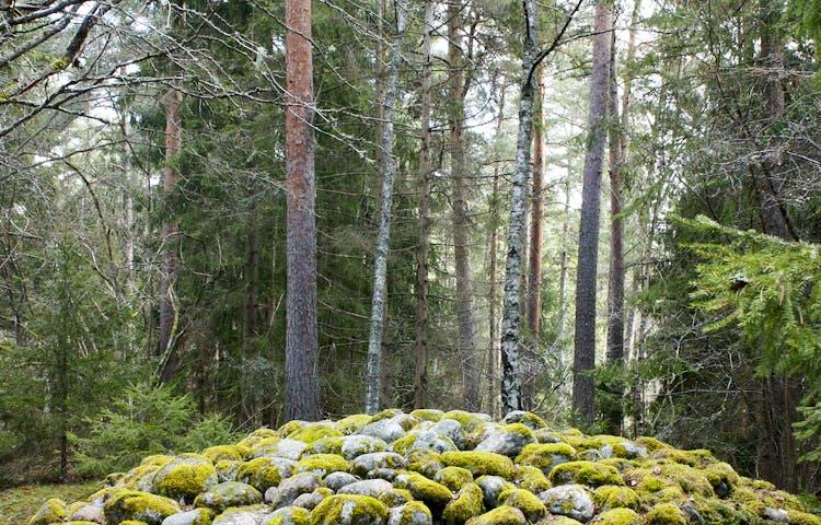 Ett brett stenröse står omgiven av tät skog.