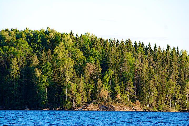 Ett berg med skog på, vatten i förgrunden.