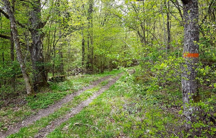 En smal grusväg med grässträng i mitten i en skog.