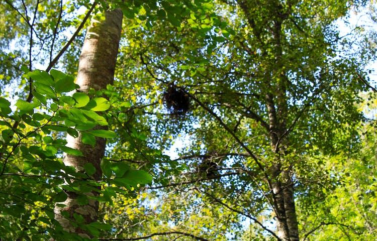 Flera olika träd och buskar med mängder av gröna löv på.