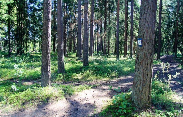Markering på träd.