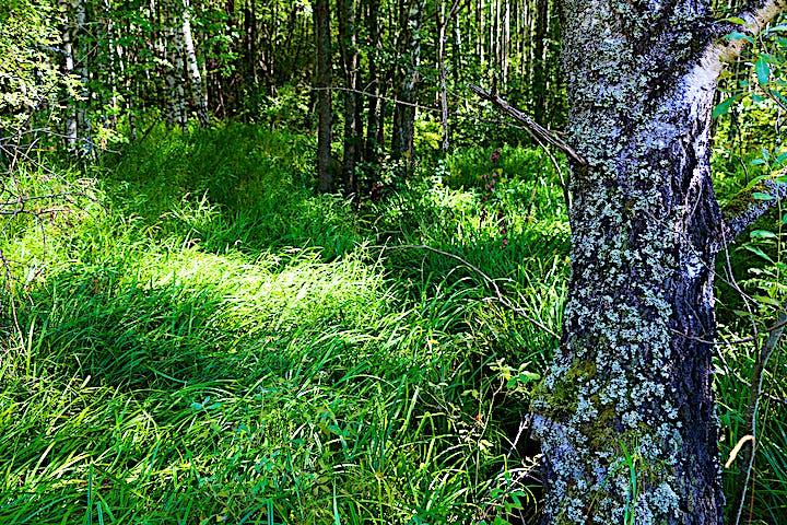 Frodigt gräs och träd.