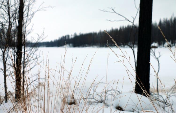 Snötäckt sjö och gråmulen himmel.