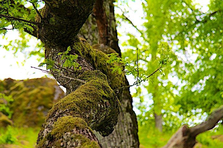 Ett träd i närbild.