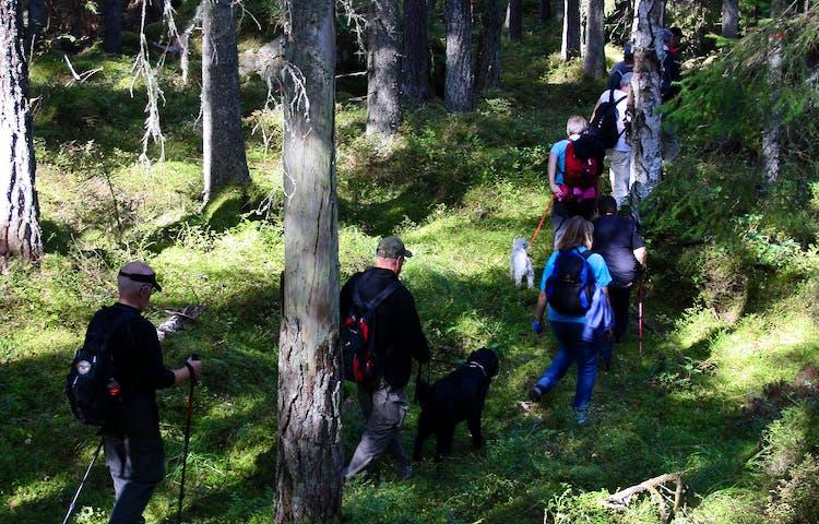En grupp vuxna går på obanad terräng genom skogen. En man har med sig en hund i koppel.