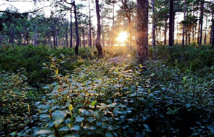 Solen letar sig in mellan träden.