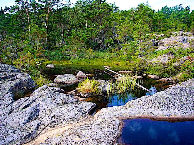 Spännande småvatten i Tullviksbäckens naturreservat. Foto: Länsstyrelsen Stockholm
