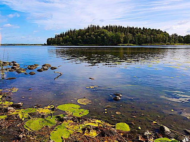 En sjö med näckrosblad. I bakgrunden en skogsbeklädd udde.