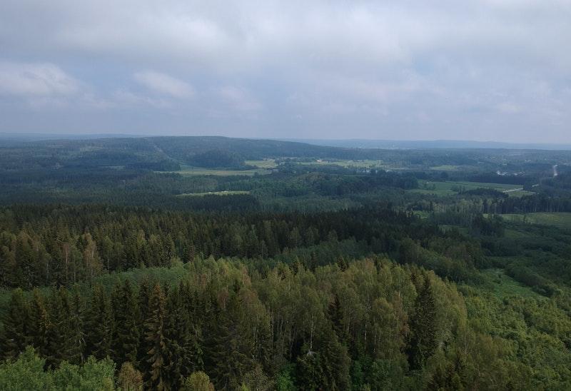 Högbyn