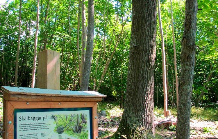 Utmed leden kan du läsa om gamla träd och dess invånare. Foto: Lena Malmström