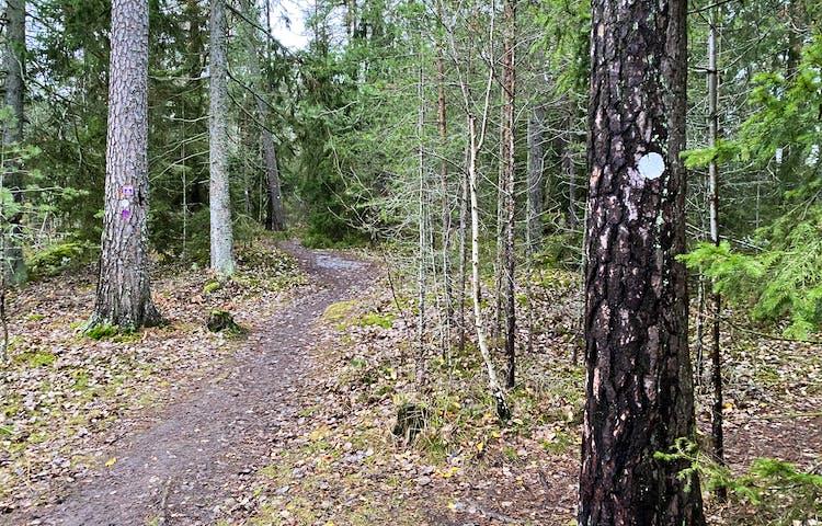 Skogsrundan. Foto: Mats Larshagen.