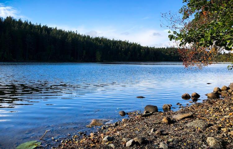 Spegelblankt vatten med skog och strand.